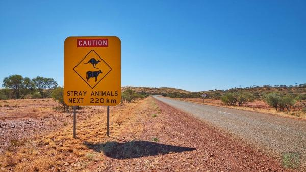 kangaroo warning sign on the side of the road when backpackers are travelling on a tour Perth to Broome.