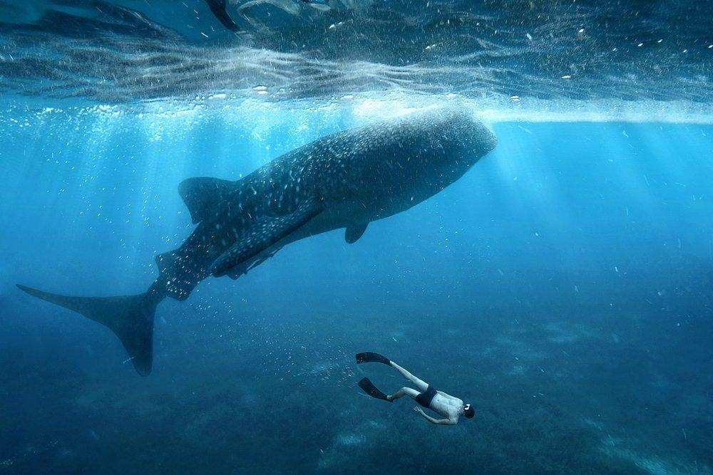 Playing with Ancient Giants – Our Comprehensive Guide To An Unforgettable Swim With Whale Sharks In Exmouth